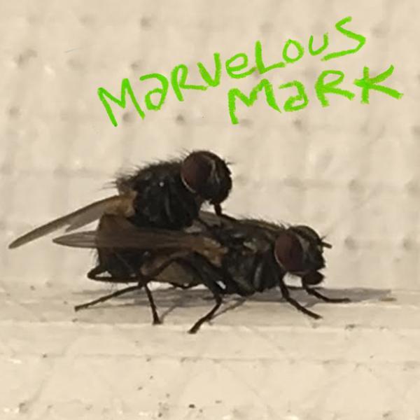 Marvelous Mark - Buzzin'