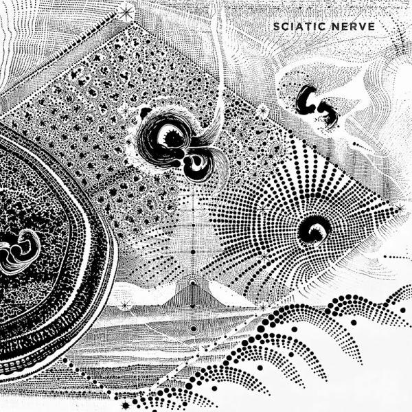 Sciatic Nerve - Sciatic Nerve